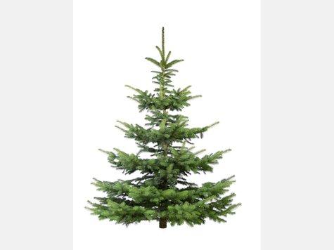 der extra tipp verr t wie der weihnachtsbaum bis zum fest frisch bleibt rhein main. Black Bedroom Furniture Sets. Home Design Ideas