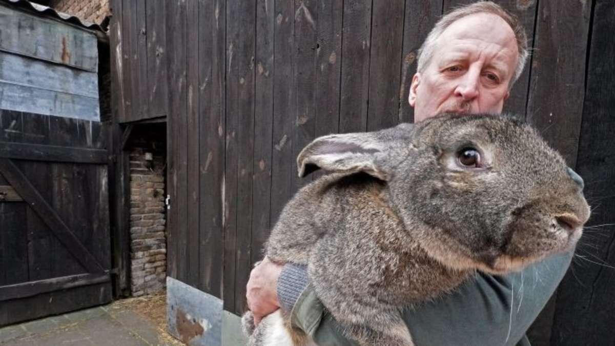 Riesen Hase
