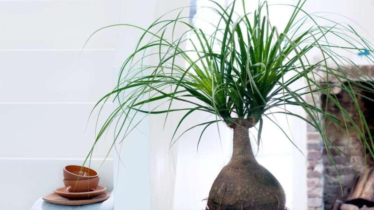 pflanzen f r faule dieses gr n braucht wenig pflege wohnen. Black Bedroom Furniture Sets. Home Design Ideas