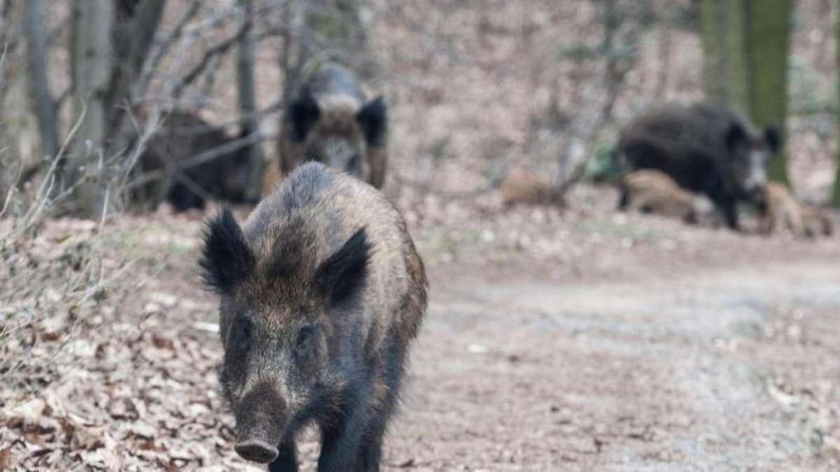 wildschweine im garten vermieter muss zaun reparieren wohnen. Black Bedroom Furniture Sets. Home Design Ideas