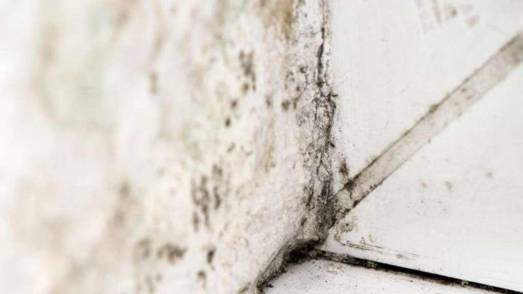 dunkle seite des winters schimmel im haus vorbeugen wohnen. Black Bedroom Furniture Sets. Home Design Ideas
