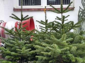 weihnachtsb ume einige wollen sechs meter riesen von. Black Bedroom Furniture Sets. Home Design Ideas