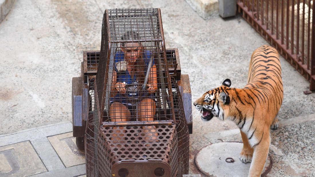 """Jessica Paszka bei""""Fort Boyard"""": Im Tiger-Käfig erlitt sie eine Panik-Attacke."""