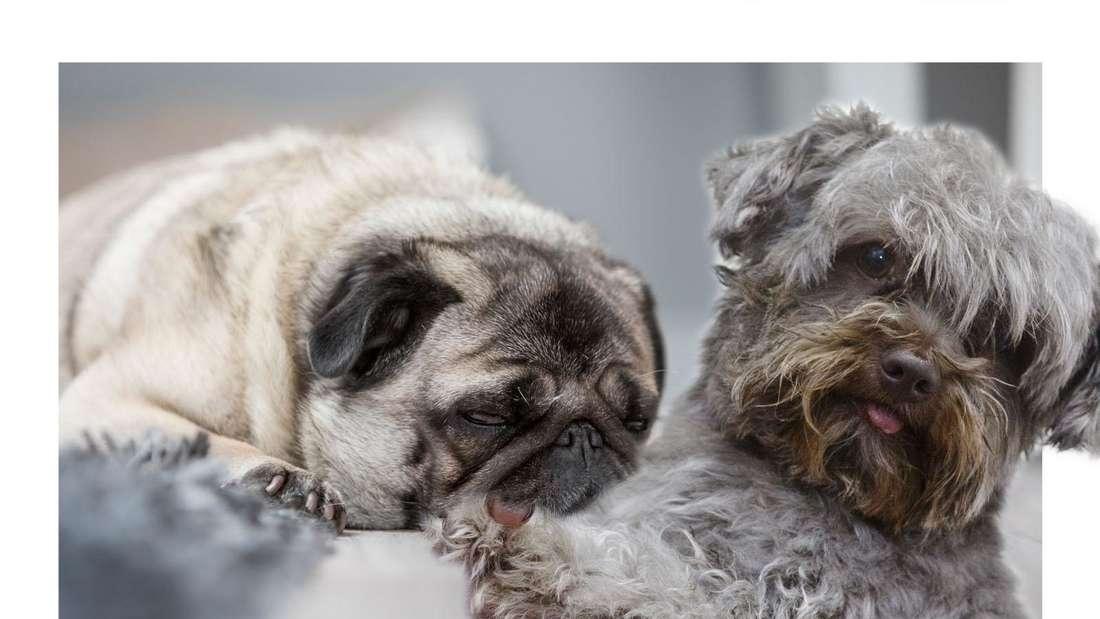 Hund: Zahlen und Statistiken zu Hunden in Deutschland