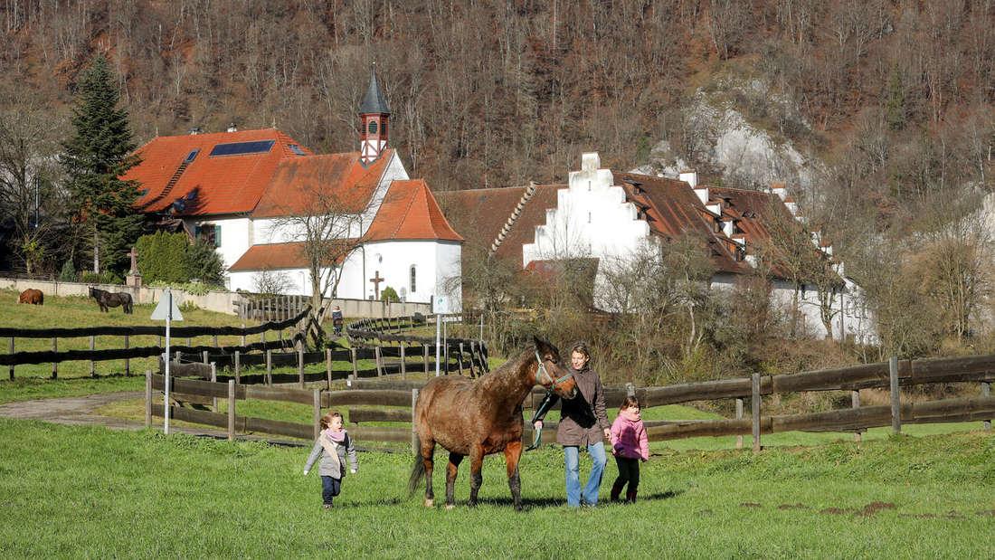 In Deutschland gibt es rund 1,3 Millionen Pferde. Die meisten werden für Freizeit und Sport genutzt.