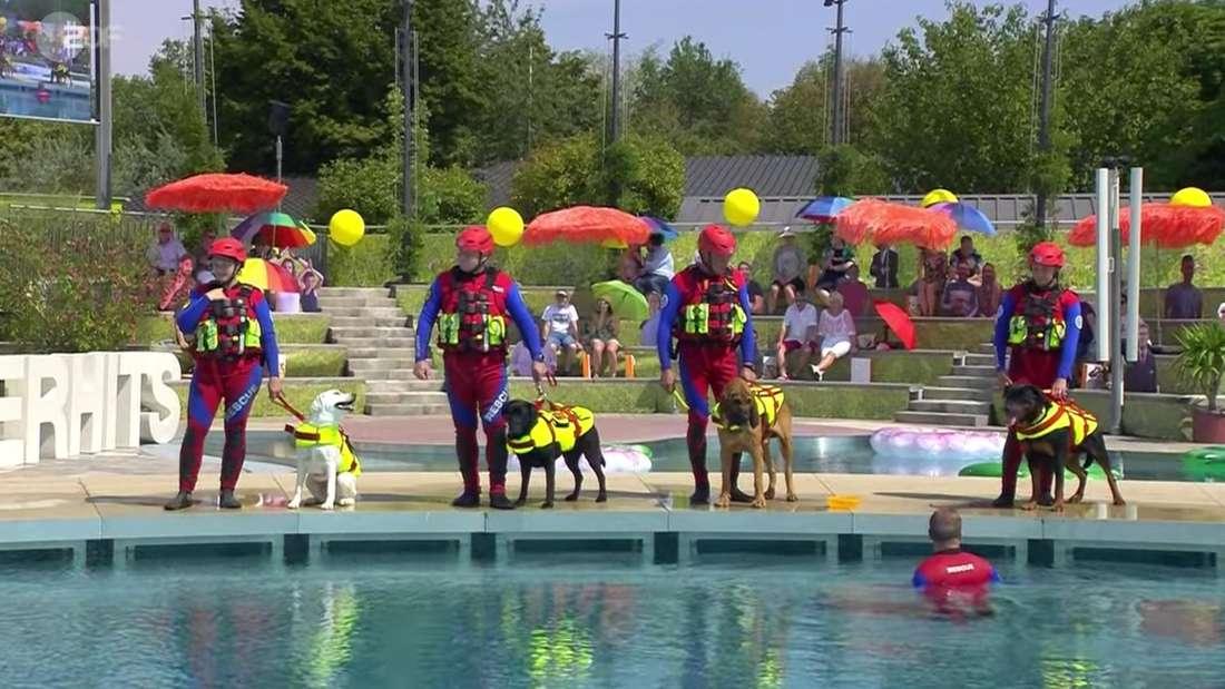 Mitarbeiter der Wasserwacht stehen mit Rettungshunden im ZDF-Fernsehgarten.