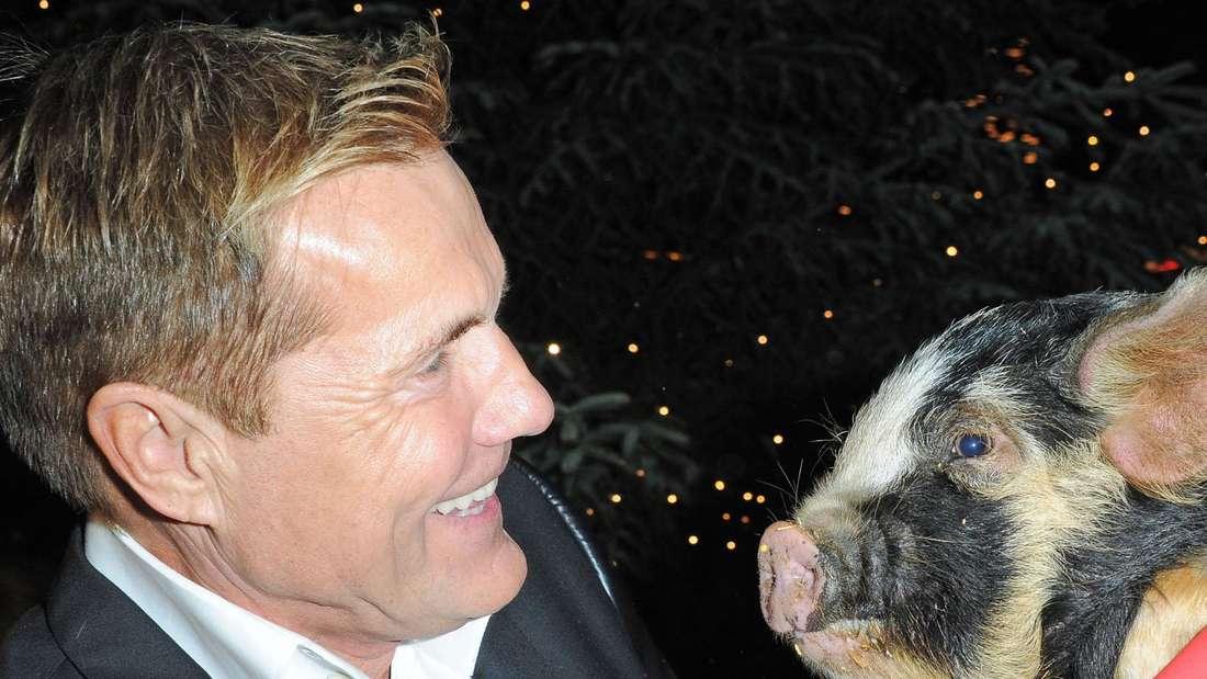 Dieter Bohlen lächelt ein kleines Schweinchen an