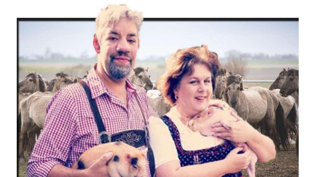 Bauer sucht Frau: Iris Abel und Uwe Abel halten zwei Ferkel in ihren Händen, im Hintergrund eine Herde Wildpferde (Fotomontage)