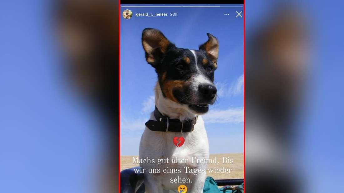 """""""Bauer sucht Frau""""-Anna und Geralds Hund """"Lucky"""" ist gestorben."""