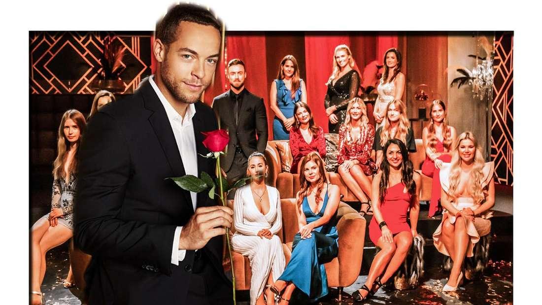 Andrej Mangold mit einer Rose in der Hand vor dem aktuellen Bachelor Niko Griesert und seinen Kandidatinnen (Fotomontage)
