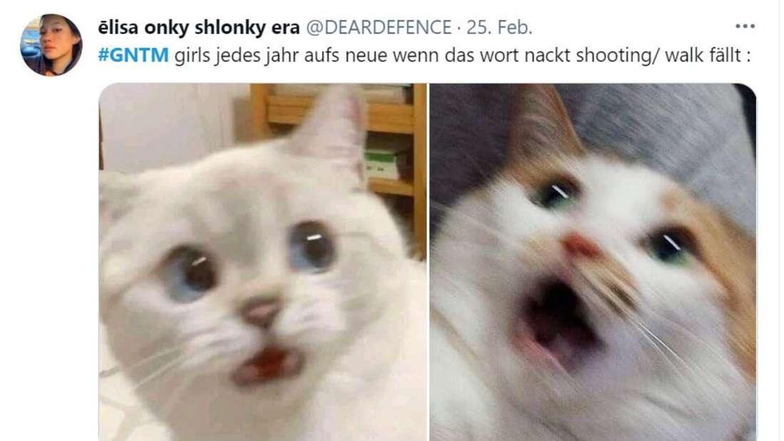 """Zwei Katzen, die erschrocken schauen. """"GNTM-Girls jedes Jahr aufs Neue, wenn das Wort nackt Shooting/Walk fällt"""""""