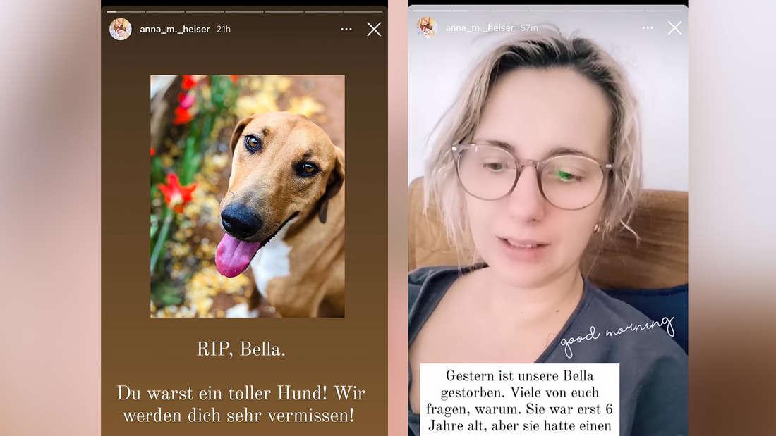 Anna Heiser und ihr Mann Gerald müssen sich von Bella verabschieden - die Hündin starb mit sechs Jahren.