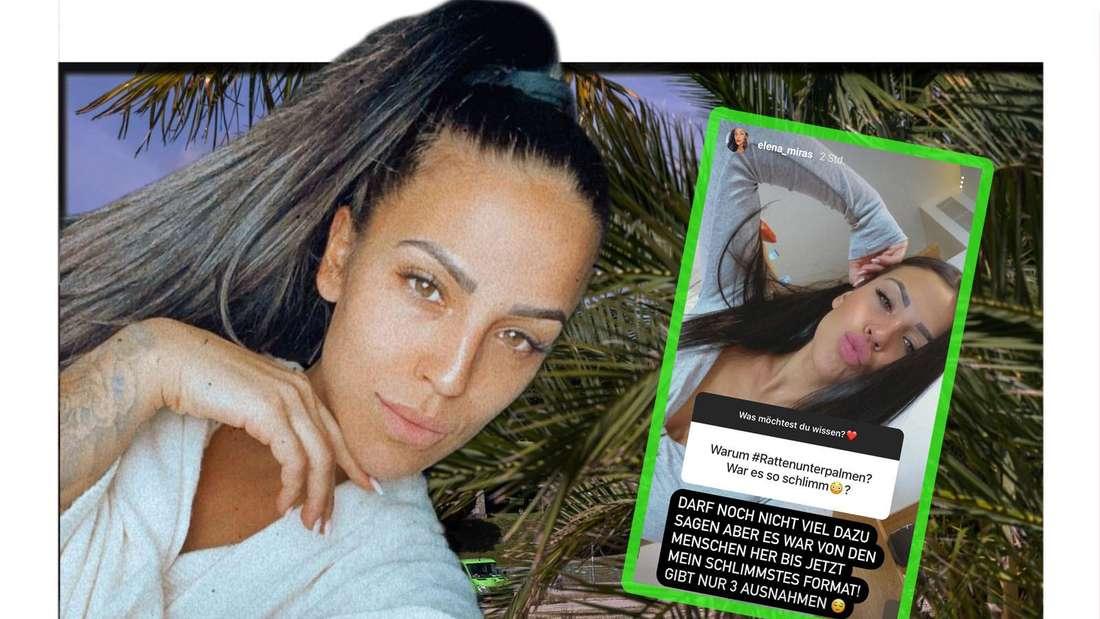 Fotomontage: Elena Miras entsetzt in ihrer Instastory mit #rattenunterpalmen vor einem Palmenhintergrund