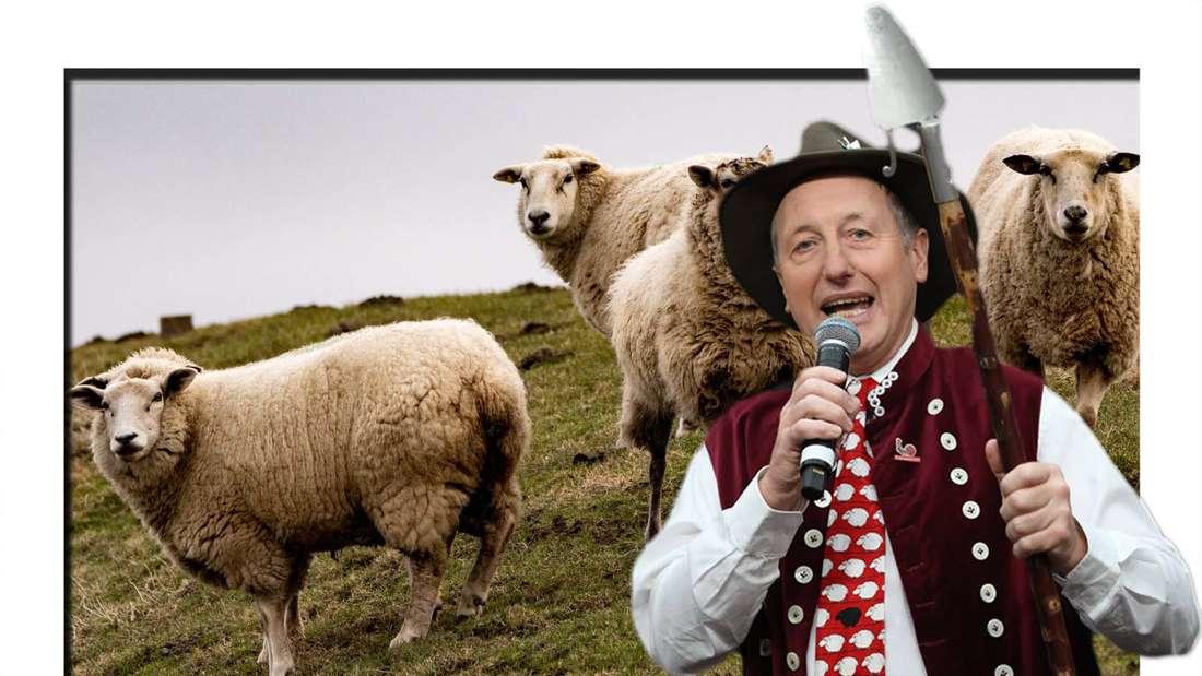 Fotomontage: Schäfer Heinrich vor einem Hintergrund mit Schafen