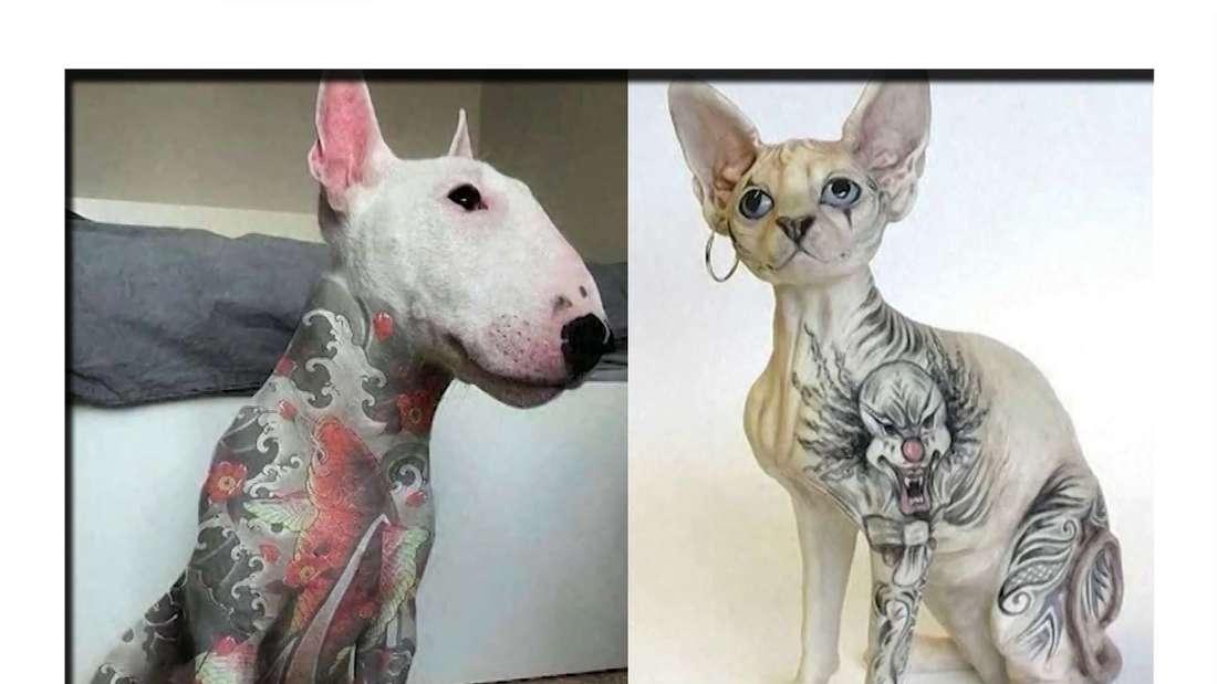 Fotomontage: Ein tätowierter Hund und eine tätowierte Katze