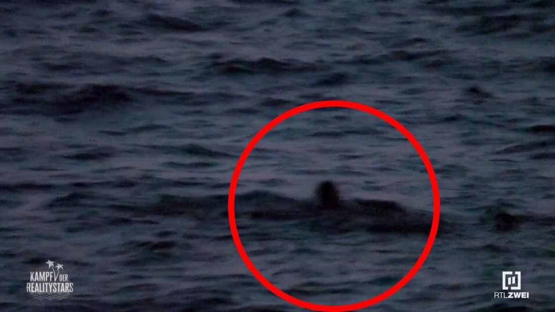 Leon Machère schwimmt aufs Meer hinaus, dabei ist es stockdunkel.